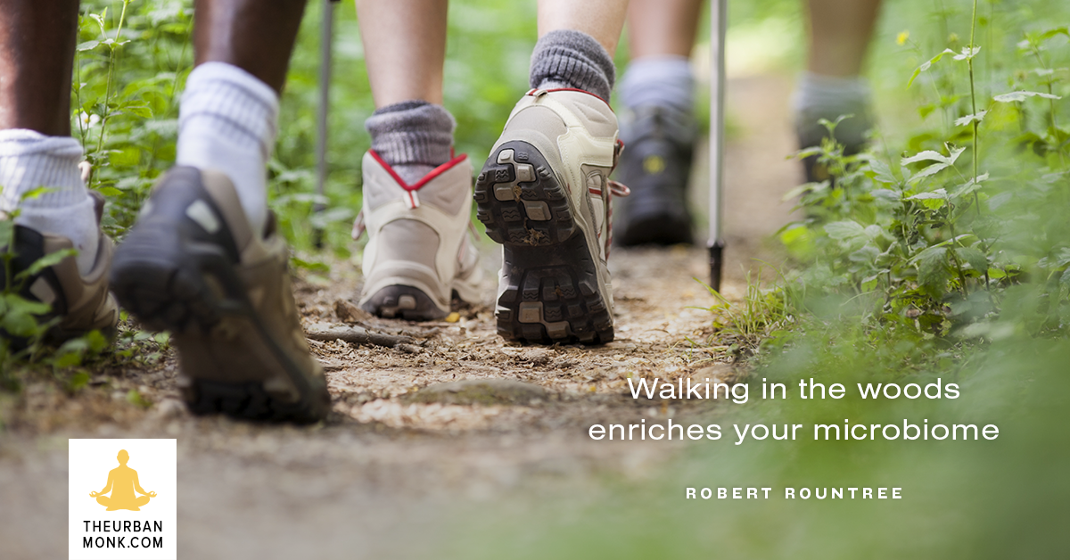 Walking In The Woods Enriches Your Micro-biome - #RobertRountree via @PedramShojai